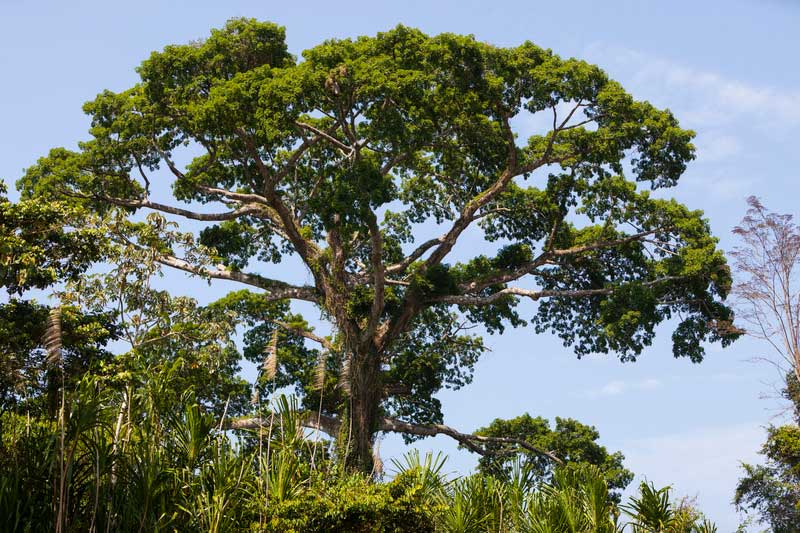 New research from Conservation International identifies carbon-rich lands that could help avoid a climate catastrophe